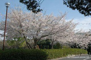 都田総合公園 入口付近