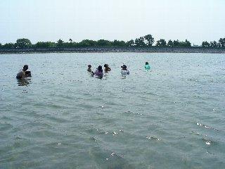 浜名湖で潮干狩り