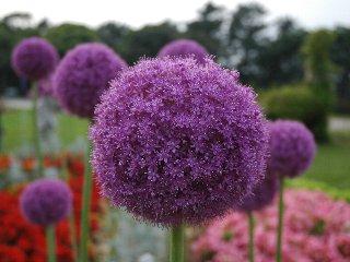 flowerpark02.jpg