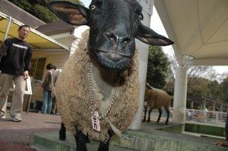 羊アップ2